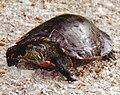 Seney National Wildlife Refuge - Youth (9702155793).jpg