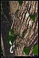 Serpentes (7378136062).jpg