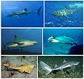 Sharks-coll-001.jpg