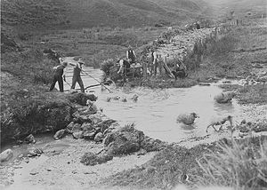 Sheep dip - Sheep dipping in a Welsh stream in the 1940s