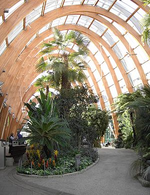 Sheffield Winter Garden - Sheffield Winter Garden in 2007