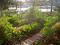 Shelton Community Garden.jpg