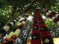Shop selling from Lalbagh flower show Aug 2013 8669.JPG