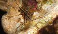 Shrimp*.jpg