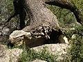 Sierra de los Tajos del Sabar (7232264416).jpg