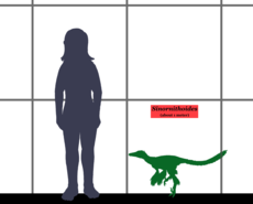 Sinornithoides Size 01.png
