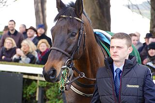 Sir Des Champs French-bred Thoroughbred racehorse