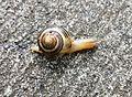Snail's pace - Flickr - brewbooks (1).jpg