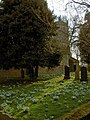 Snowdrops in profusion in Kirk Bramwith churchyard - geograph.org.uk - 1184409.jpg