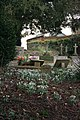 Snowdrops round the graves - geograph.org.uk - 1761109.jpg