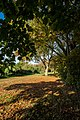 Snuff Mill Lane, Cottingham IMG 7661 - panoramio.jpg