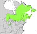 Sorbus decora range map.png
