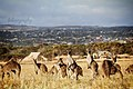 South Australia.jpg