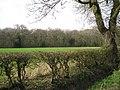 Southeast edge of Manor Wood - geograph.org.uk - 1804993.jpg