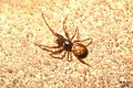 Spider (FG) (6177591338).jpg