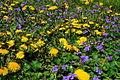 Spring-flowers-blooms - West Virginia - ForestWander.jpg