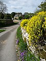 Spring flowers, Notgrove-geograph-5364351-by-Christine-Johnstone.jpg