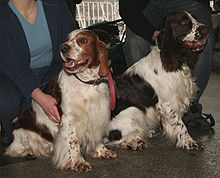 """Two dogs sit alongside each other. They are both mostly white and appear similar, but the right one has dark patches and is larger, while the left one has reddish patches and is slightly smaller."""