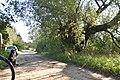 Stara wierzba - Lasmiady - 880cm.jpg