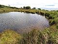 Starr-110929-9868-Juncus effusus-habit and reservoir-Hanaula-Maui (24821839650).jpg