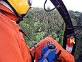 Starr-141014-2181-Caesalpinia decapetala-aerial view-Kakipi Gulch Haiku-Maui (25247189765).jpg