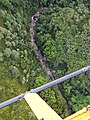 Starr-141014-2238-Caesalpinia decapetala-aerial view stream-Kakipi Gulch Haiku-Maui (25154125981).jpg