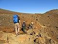 Starr-170125-6511-Dubautia menziesii-heading down trail Walt Gayle Amandine and Forest-Sliding Sands Trail Haleakala National Park-Maui (33330482876).jpg