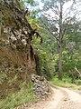 Starr 050818-4103 Eucalyptus sp..jpg