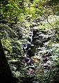 Stockghyll Force near Ambleside - geograph.org.uk - 1304855.jpg