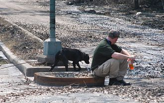 Social effects of Hurricane Katrina - A stray dog abandoned by its owners approaches a rescue worker in New Orleans. Many animals were left by their owners who could not take them to the evacuation shelters.