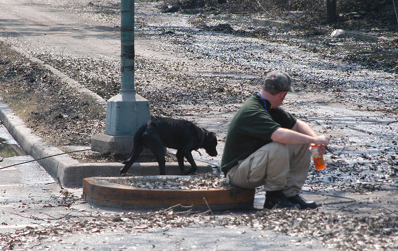 File:Stray dog approaching rescue worker in New Orleans following Katrina.jpg