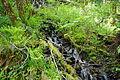 Stream from Atfalati Falls.JPG