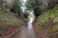 Sunken lane west of Mamhilad - geograph.org.uk - 726773.jpg