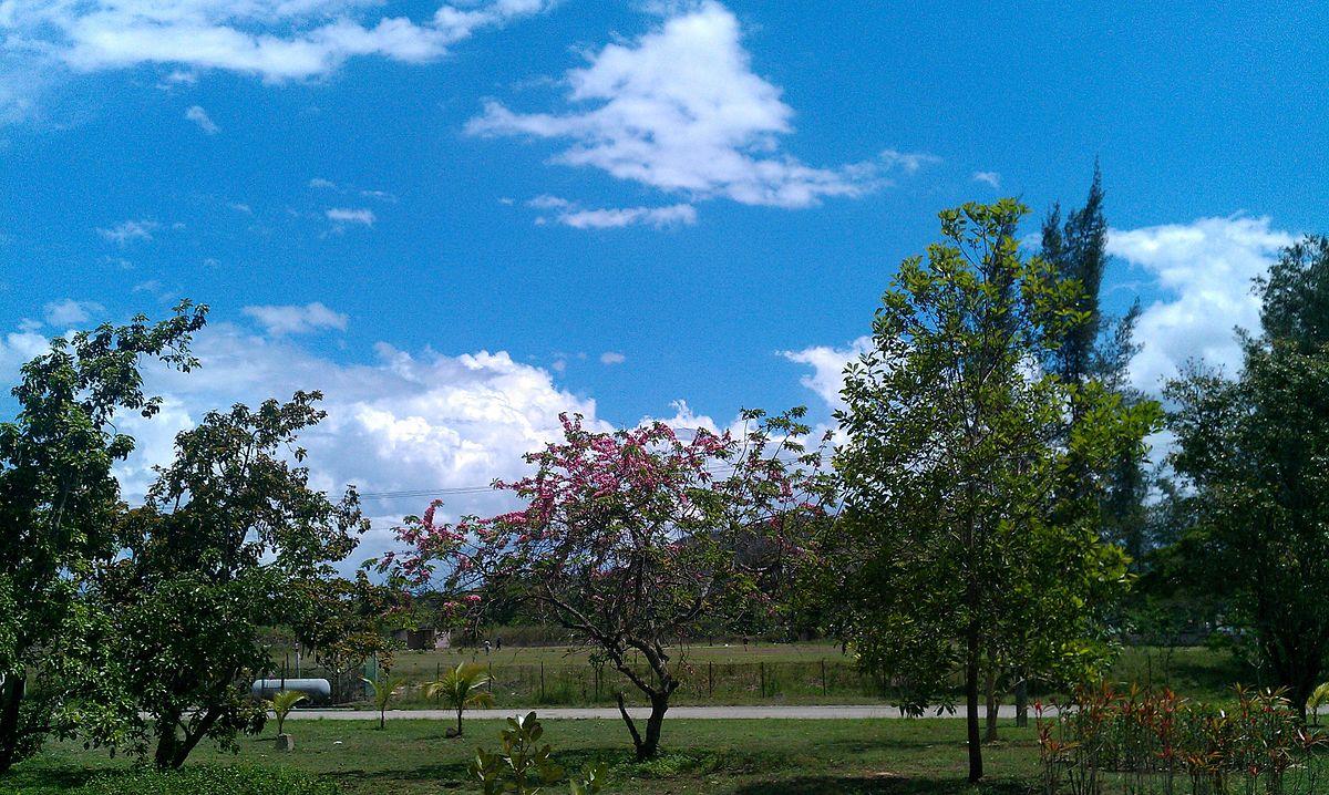 Jard n bot nico de villa clara wikipedia la for Villas de jardin seychelles tripadvisor