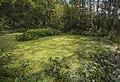 Swamp Setka drainage canal. 0187.jpg