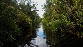 Tanjung Puting Wikipedia
