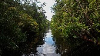 Tanjung Puting - Image: Tanjung Puting 90153
