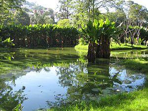 Botanical and Zoological Garden of Tsimbazaza - Image: Taro Tsimbazaza Zoo