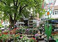 Tecklenburg Geranienmarkt 02.jpg