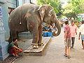Temple Elephant Greets Passersby - Pondicherry - India.JPG