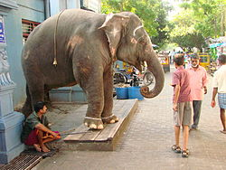 Temple Elephant Greets Passersby - Pondicherry - India.JPG
