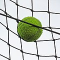 Tennis ball at Highgate Cricket Club, Crouch End, London.jpg