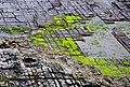 Tessellated Pavement 01.jpg