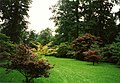The Acer Glade at Westonbirt Arboretum - geograph.org.uk - 349966.jpg