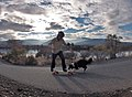 The Border Collie and The Skateboard.jpg