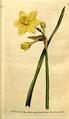 The Botanical Magazine, Plate 78 (Volume 3, 1790).png
