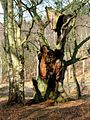 The Dead Tree - geograph.org.uk - 1249.jpg