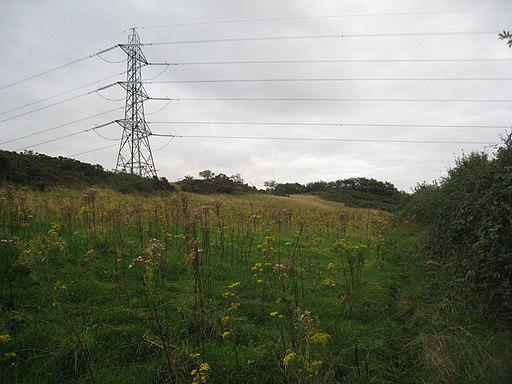 The Delamere Way at Birch Hill - geograph.org.uk - 2613556