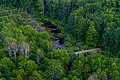 The Forest Below PLT-TR-FT-5.jpg