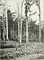 The Land of the Lyre bird; a story of early settlement in the great forest of south Gippsland. Being a description of the Big Scrub in its virgin state with its birds and animals, and of the (14563153040).jpg